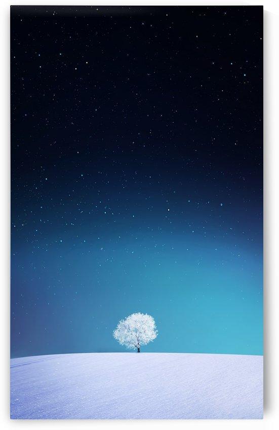 Apple by Bess Hamiti