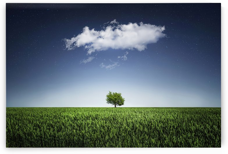A tree covered with clouds by Bess Hamiti