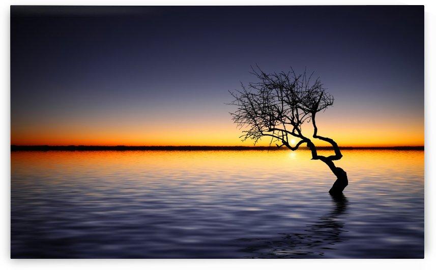 Lake by Bess Hamiti