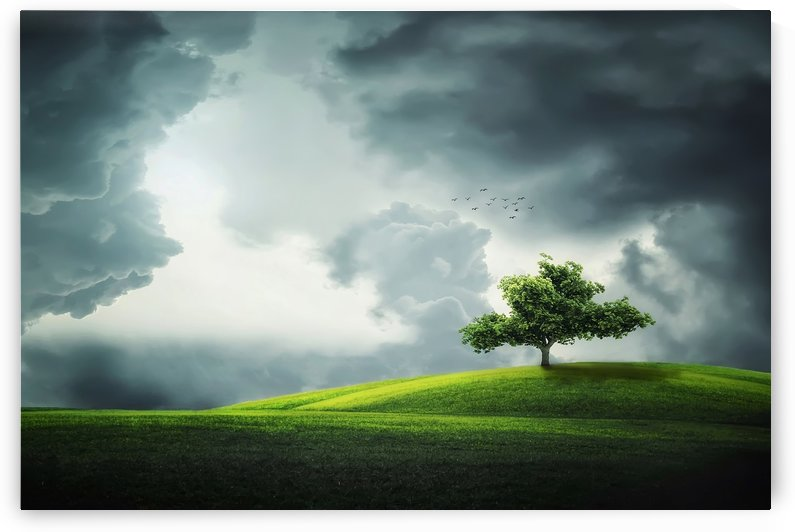 Lonely Tree, birds by Bess Hamiti
