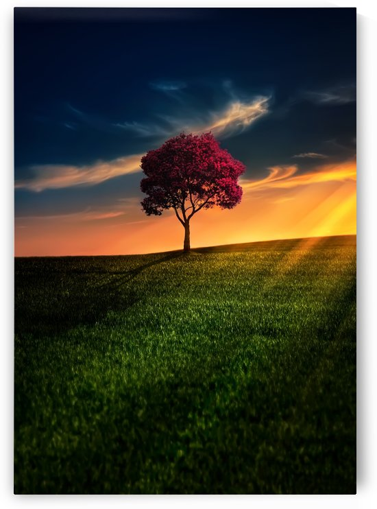 Awesome Solitude by Bess Hamiti