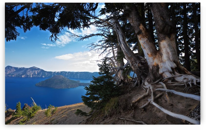 Crater Lake & Gnarled White Pine by Craig Nowell Stott