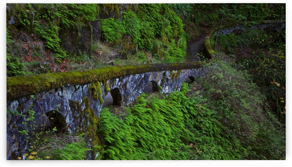 Rock wall trail, Sheppard's Dell, Columbia River Gorge, Oregon by Craig Nowell Stott