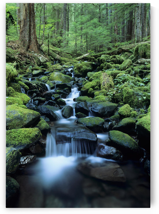 USA, Olympic National Park; Washington, Stream Waters Falling Over Rocks Along Soleduck Falls Trail by PacificStock