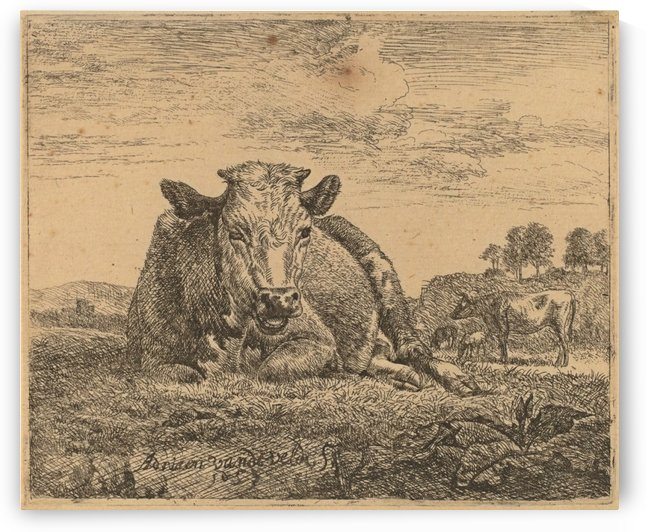 Recumbent cow 1657 by Adriaen van de Velde