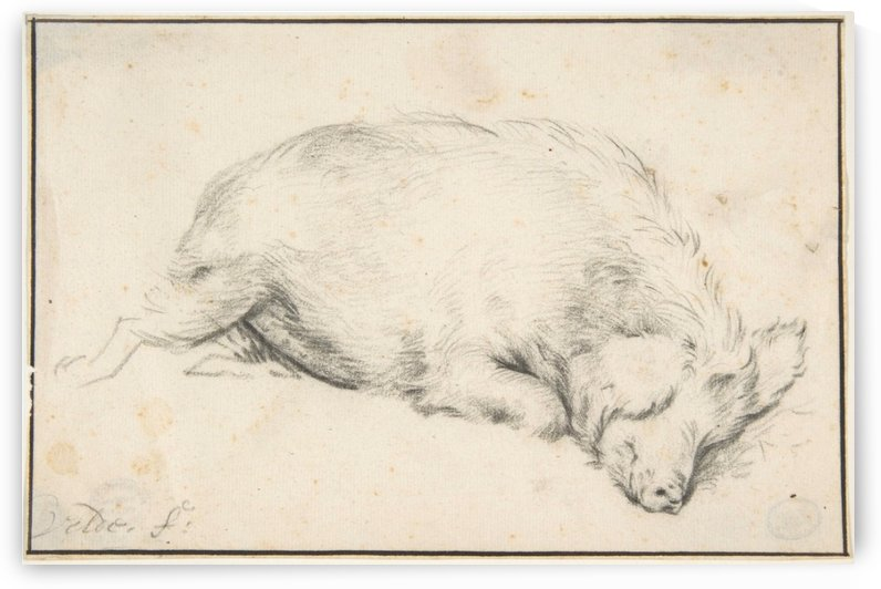 A sleeping swine by Adriaen van de Velde