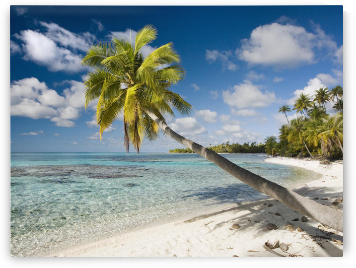 French Polynesia, Tahiti, Tuamotu Islands, Rangiora, Palm Tree On The Beach. by PacificStock