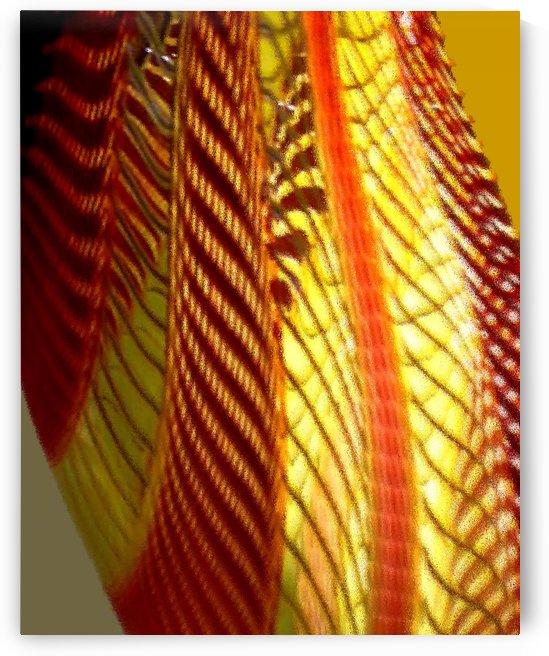 Dragon Wing by Lisa Drew Minneapolis Photo Artist