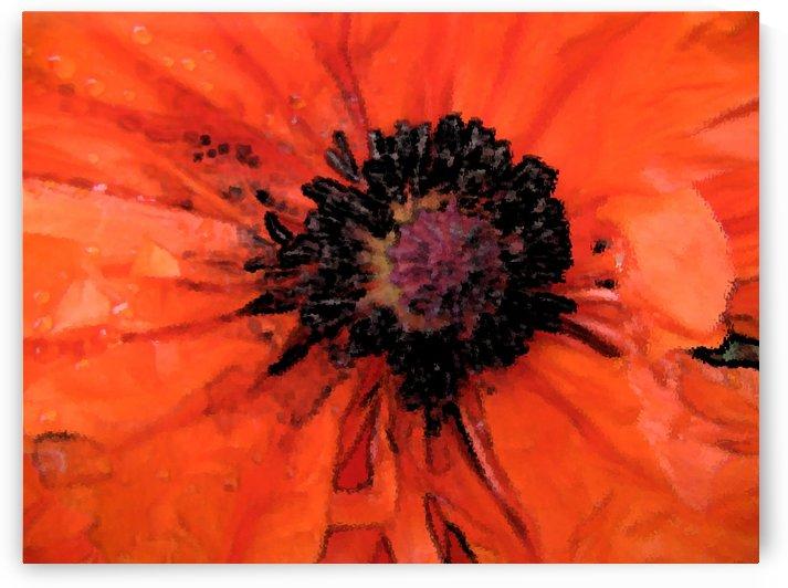 poppies will make you sleep by Lisa Drew Minneapolis Photo Artist