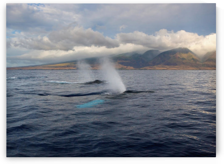 Hawaii, Maui, The Spout Of Two Humpback Whales. by PacificStock
