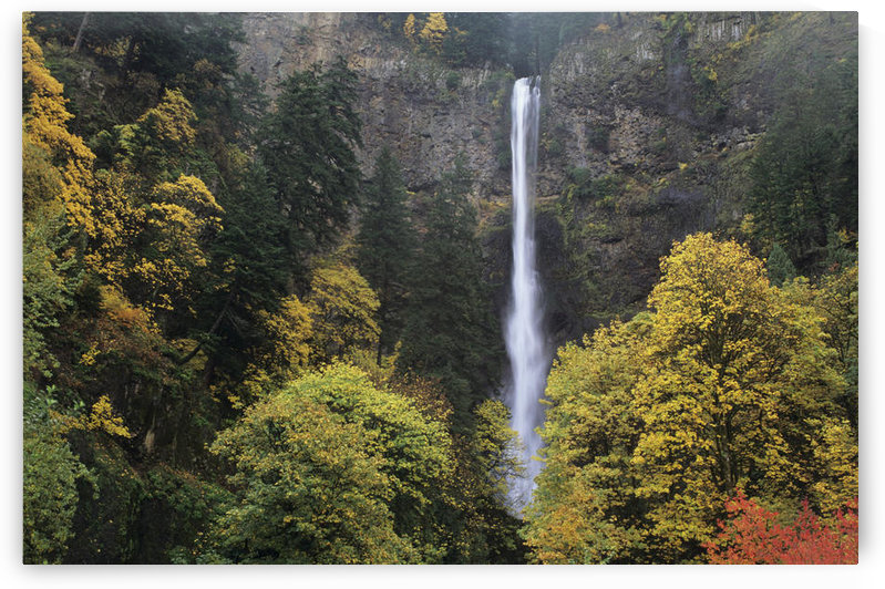 USA, Columbia River Gorge; Oregon, Multnomah Falls Among Fall Colors by PacificStock
