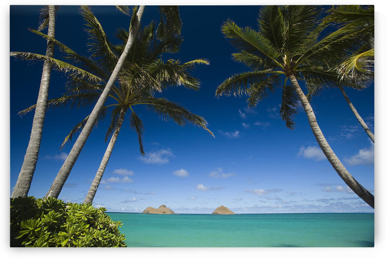 USA, Hawaii, Oahu, Palm tree over Pacific ocean with Mokulua island in background; Lanikai by PacificStock