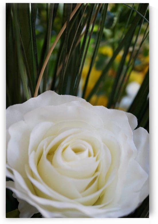 White rose with green by Babetts Bildergalerie
