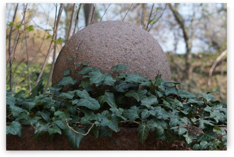 stone ball with ivy ranks by Babetts Bildergalerie