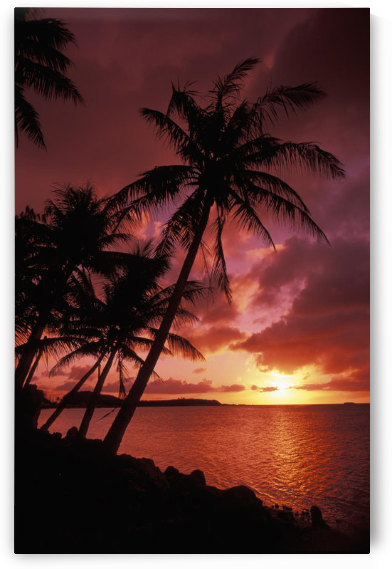 Guam, Tumon Bay, Bright Red Sunset And Silhouetted Palms On Beach. by PacificStock