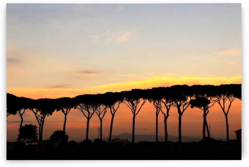 Italian Sunshine - Sunset on Italian landscape, pines - The Roman and italian landscape, Rome, Italy, photography by Alessandro Nesci