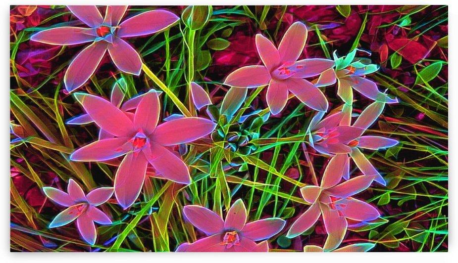 radiantplant by Chazzi R  Davis