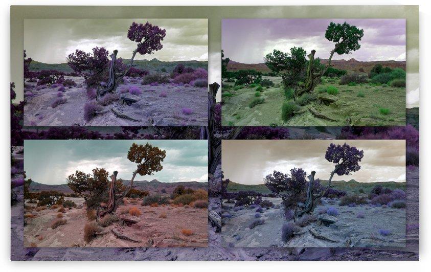 Utah Tree Collage by Kathy Zegarlinska