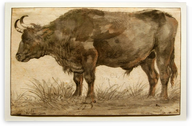 Cow in the grass by Cornelis Saftleven