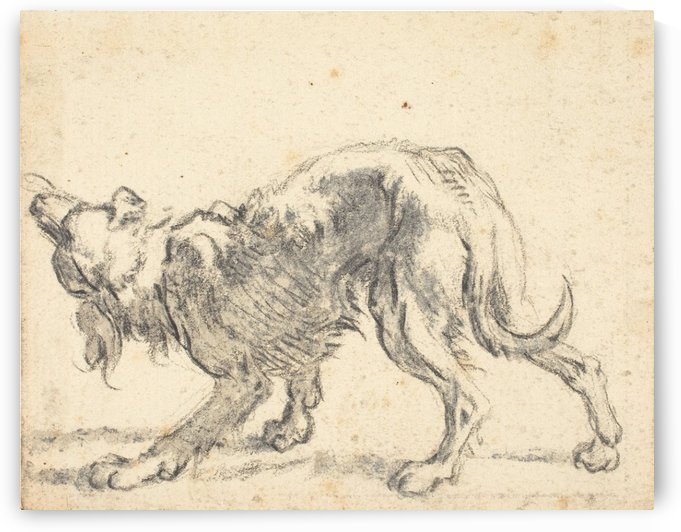 A dog by Cornelis Saftleven