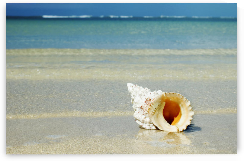 Tropical Seashell On The Beach With Gorgeous Clear Blue Ocean Behind by PacificStock