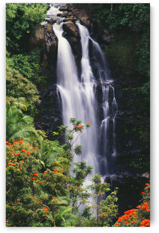 Hawaii, Big Island, Hamakua Coast, Nanue Falls Surrounded By Orange African Tulip Tree by PacificStock