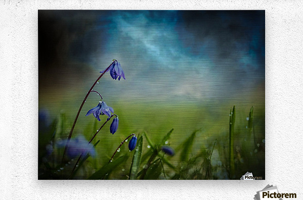 After the spring rain  Metal print