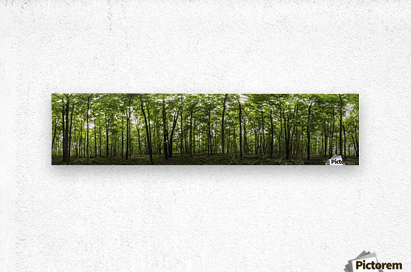 Panoramic image of a deciduous forest; Ontario, Canada  Metal print
