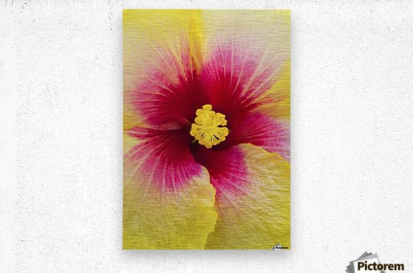 Close-up macro shot of a beautiful red and yellow Hibiscus flower; Honolulu, Oahu, Hawaii, United States of America  Metal print