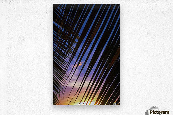 Close-up of silhouetted palm fronds with beautiful sunset color sky in the background; Honolulu, Oahu, Hawaii, United States of America  Metal print