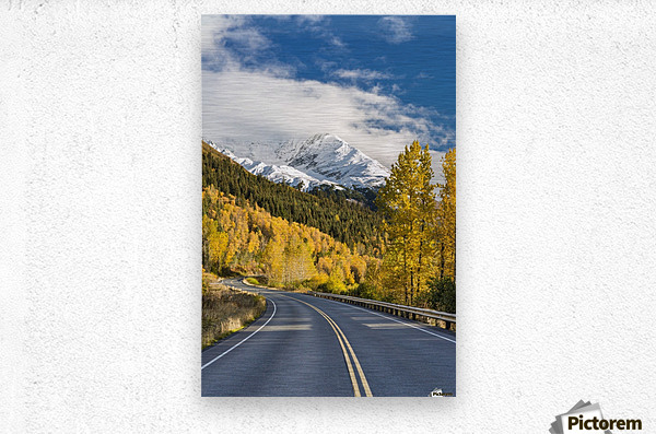 Snow-capped Kenai Mountains dwarf the Seward highway, trees covered in yellow leaves in autumn line the road, South-central Alaska; Seward, Alaska, United States of America  Metal print