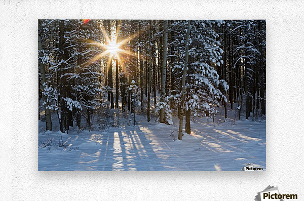 Sunburst coming through a snow covered forest; Kananaskis Country, Alberta, Canada  Metal print