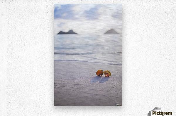 A set of two rare Hawaiian Sunrise Scallop Seashells, also known as Pecten Langfordi, in the sand at Lanikai beach, with Mokulua islands in background; Honolulu, Oahu, Hawaii, United States of America  Metal print