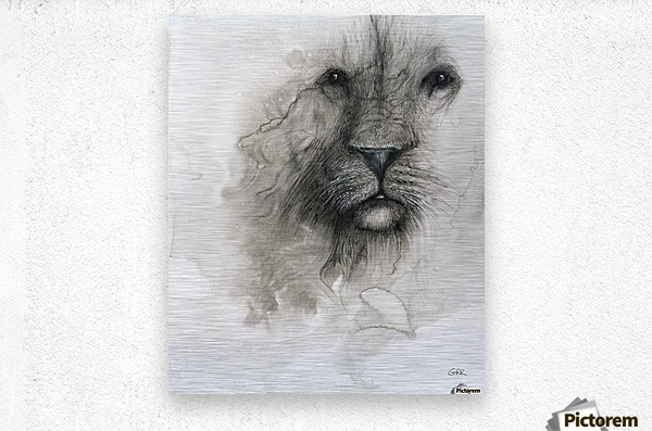 Illustration of a lion's face on a white background  Metal print