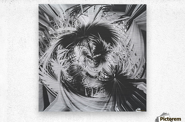 spiral palm leaves abstract background in black and white  Metal print