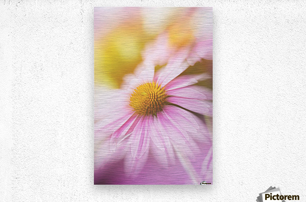 Dreamy Pink Coneflower   Metal print