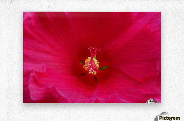Pistil painted  Metal print