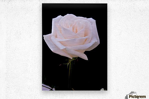 Rose for bride  Metal print