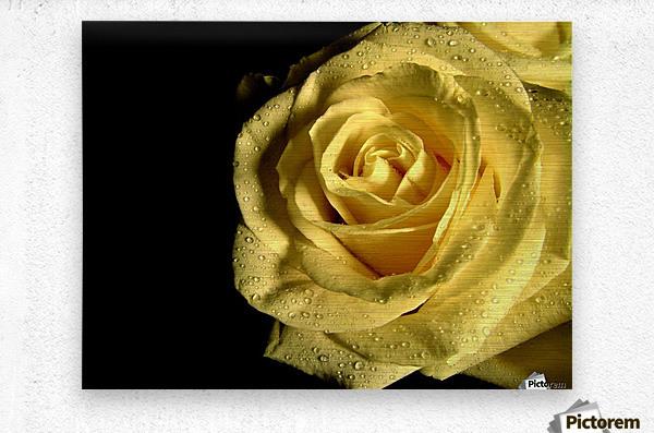 Yellow dew  Metal print