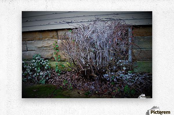 Winter Tears  Metal print