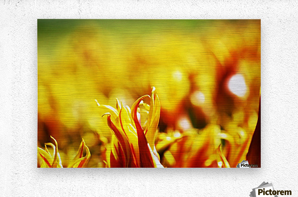 Flower Touch  Metal print