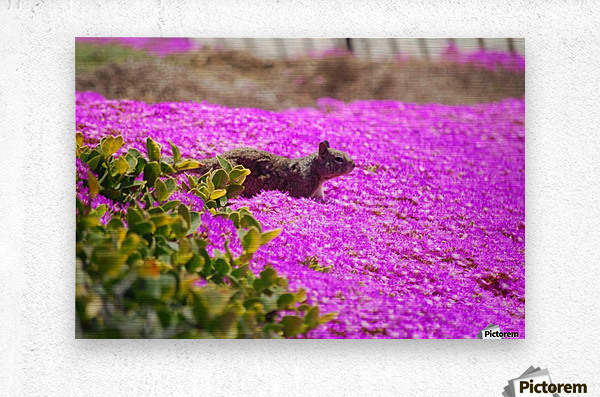 Pink Wild Flowers on a Hill With a Squirrel  Metal print