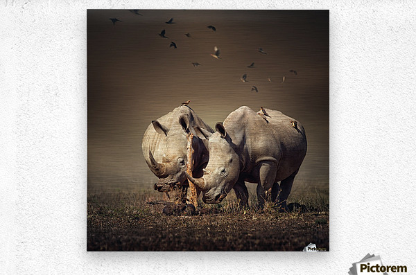 Two Rhinoceros with birds  Metal print