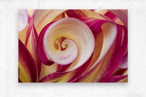 Spirales  Metal print