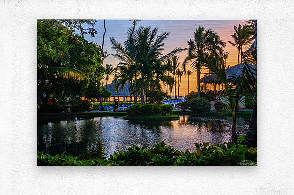 Multicolored tropical dawn with pond and palm trees, white pelican  Metal print