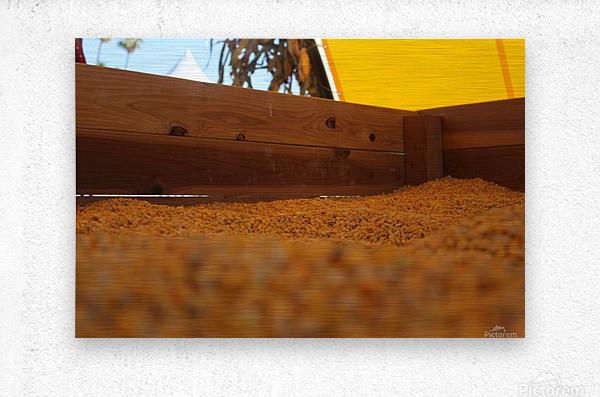 Dried Corn 02  Metal print