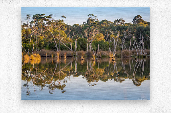 Evening river bank with glassy reflection  Metal print