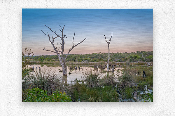 Wetlands at sunset with smoke haze.  Metal print