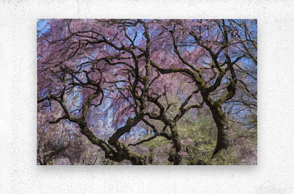 Abstract Cherry Blossom tree  Metal print