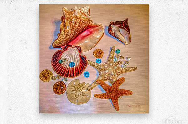 Sea Treasures  Metal print